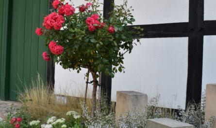 In der Kulturscheune im Kurpark Rothenuffeln ließen sich im vergangenen Jahr 6 Paare trauen. Foto: Gemeinde Hille