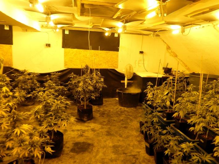 Die Pflanzen der Drogenplantage befanden sich in unterschiedlichen Wachstumsstadien. Foto: Polizei Minden-Lübbecke