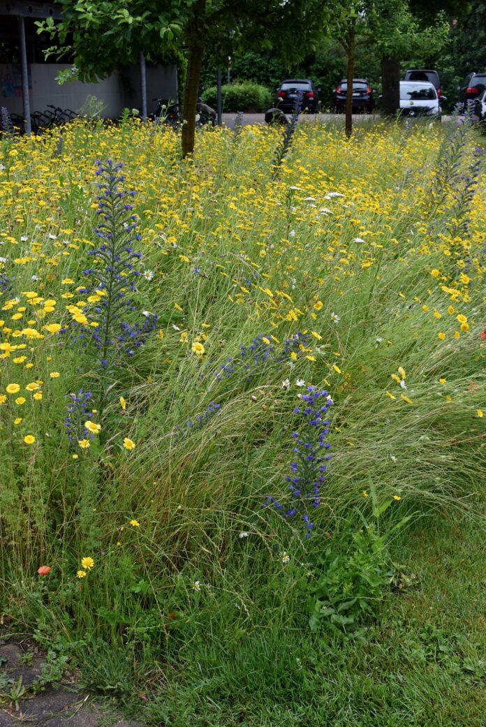 Kunterbunte Vielfalt und Insektennahrung: Die Blühstreifen in der Gemeinde Hille. Foto: Gemeinde Hille